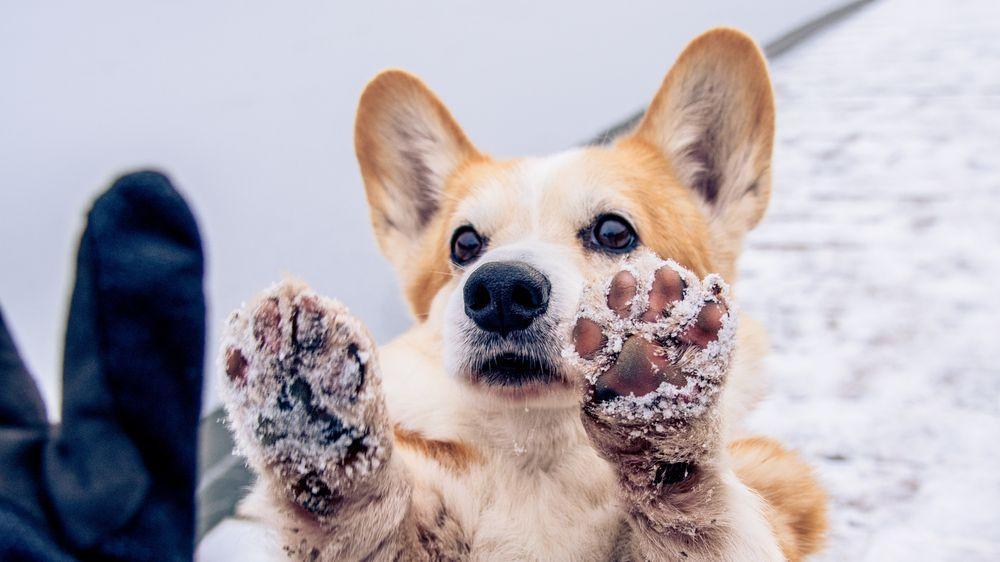 hundepfoten winter pflege anleitung