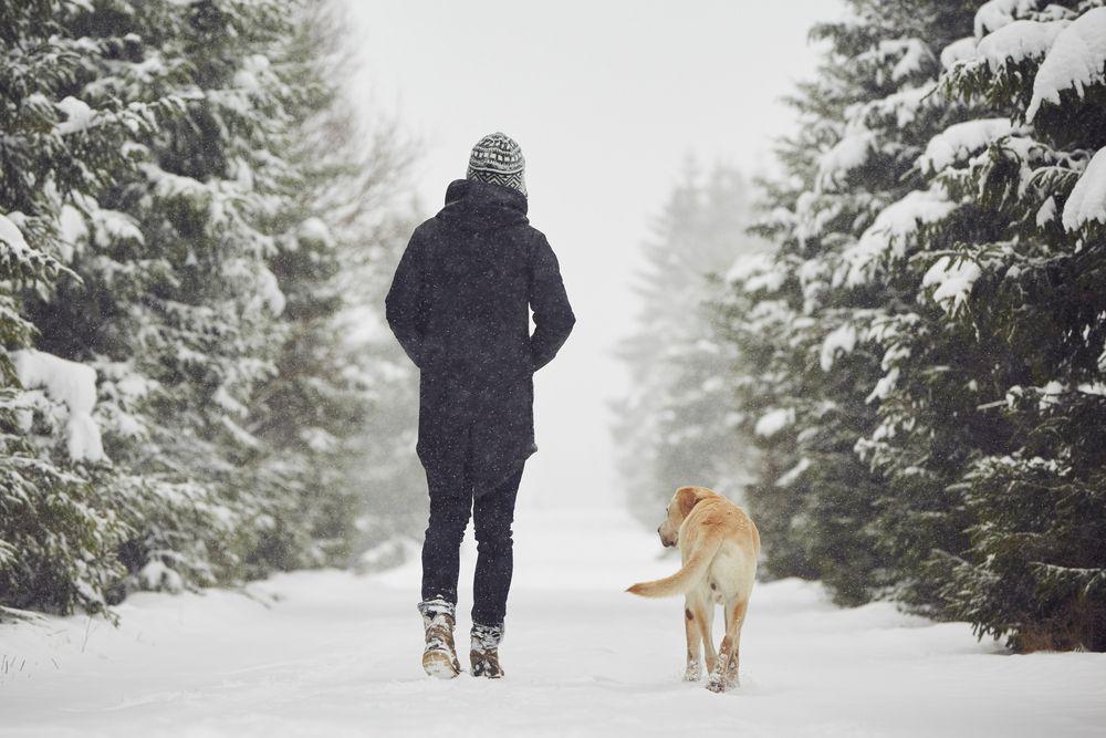 pfotenpflege hund winter