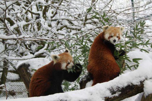 Die Tiere Und Der Winter Familienführung Im Zoo Linz Hello Familiii