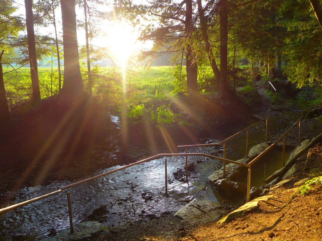 Barfußwandern in Wenigzell: unberührte Natur und beste Luftqualität, so präsentieren sich die Wanderwege in Wenigzell.