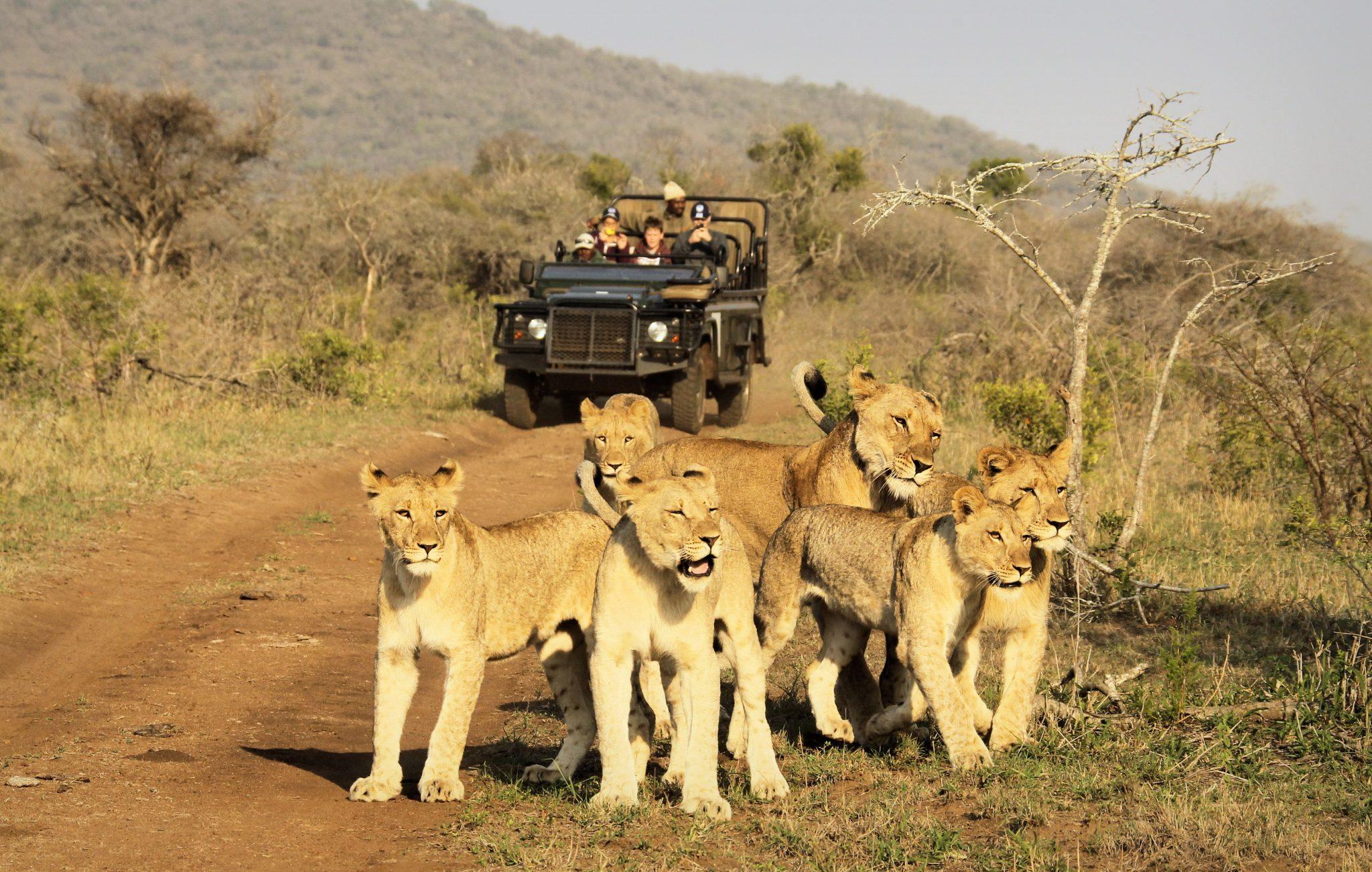Tanda Safari Game Drive