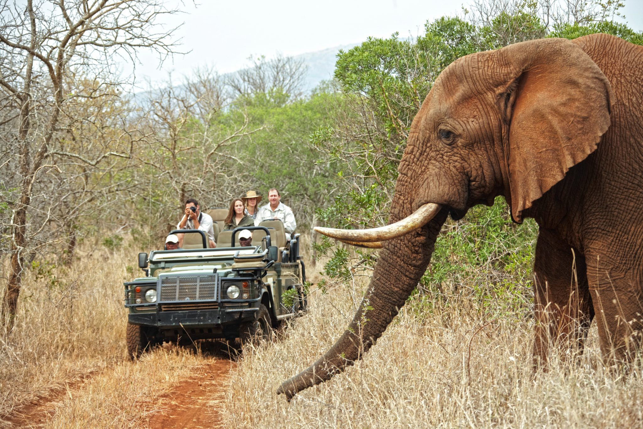 Thanda Safari Game Drive mit Elefant