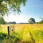 Niedersachsen: Worpswede, Lower Saxony, Germany - Teufelsmoor landscape around Hamme Niederung area.