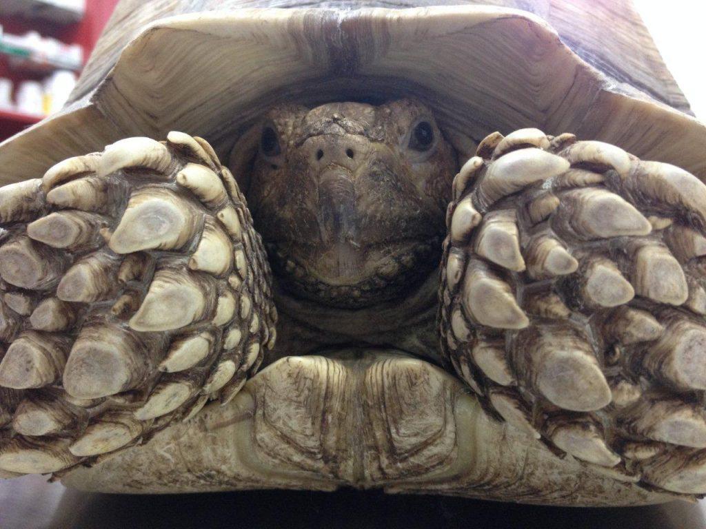 Schildkröte beim Zoodoc