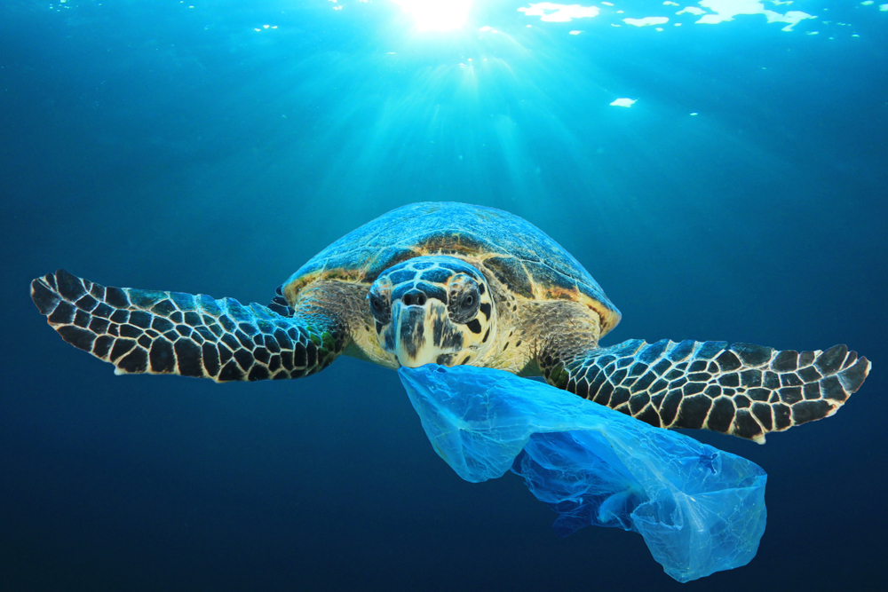 Schildkröte frisst Plastik