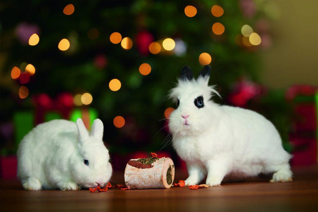 Kaninchenpärchen_Fressnapf