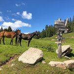 eurohike-wanderreise-moelten-rundwanderung-pferde