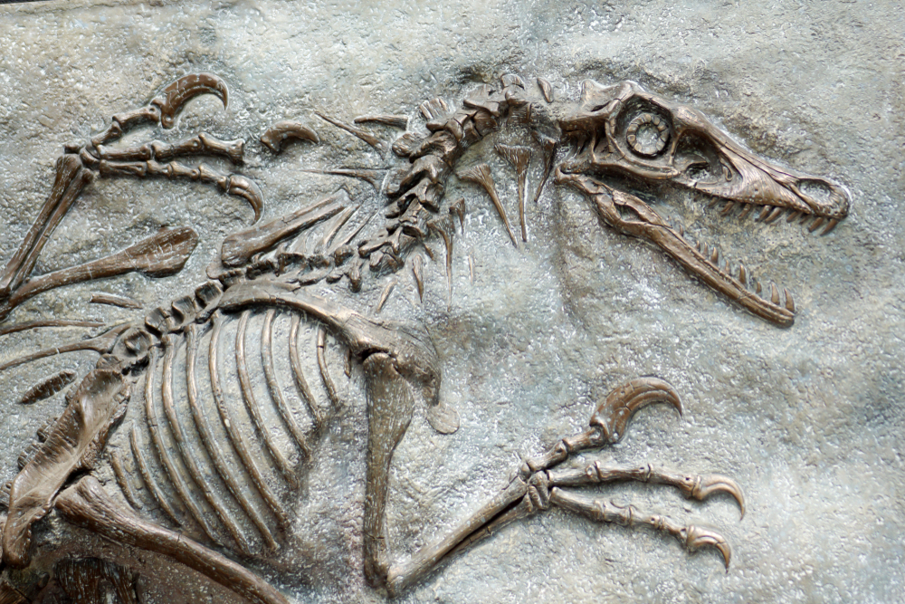 Dinosaurierskelett