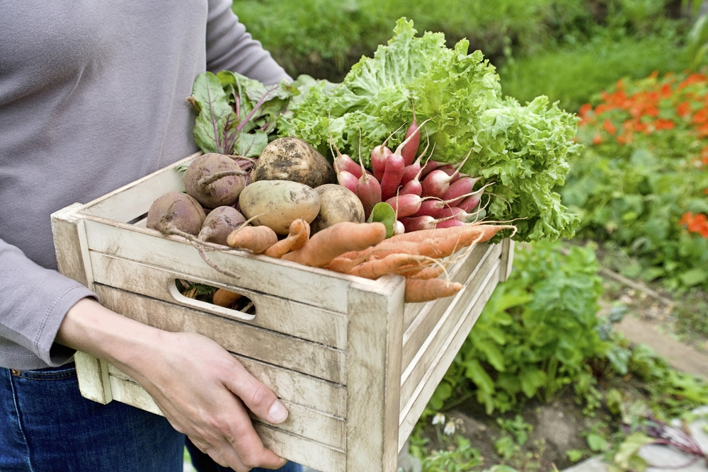 Midsection,Of,Woman,Carrying,Crate,With,Freshly,Harvested,Vegetables,In