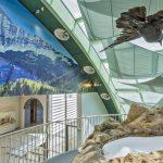 Kolkrabe am Gletscher im Haus für Natur (Präparat)