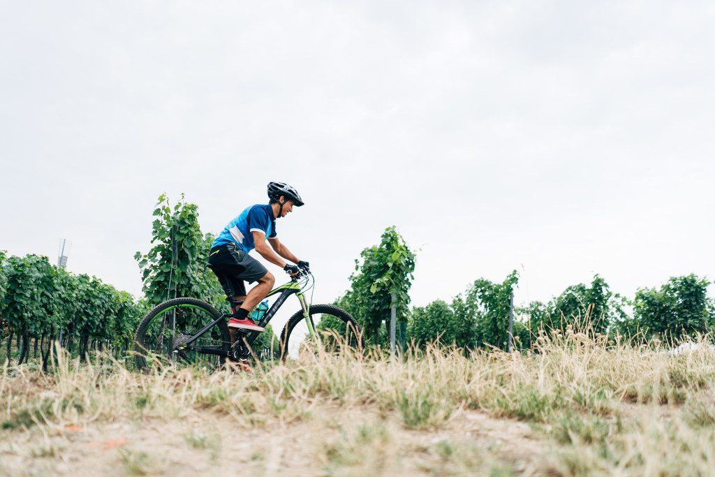 Radfahren im Weinvirtel, Weinviertel Tourismus Gollner