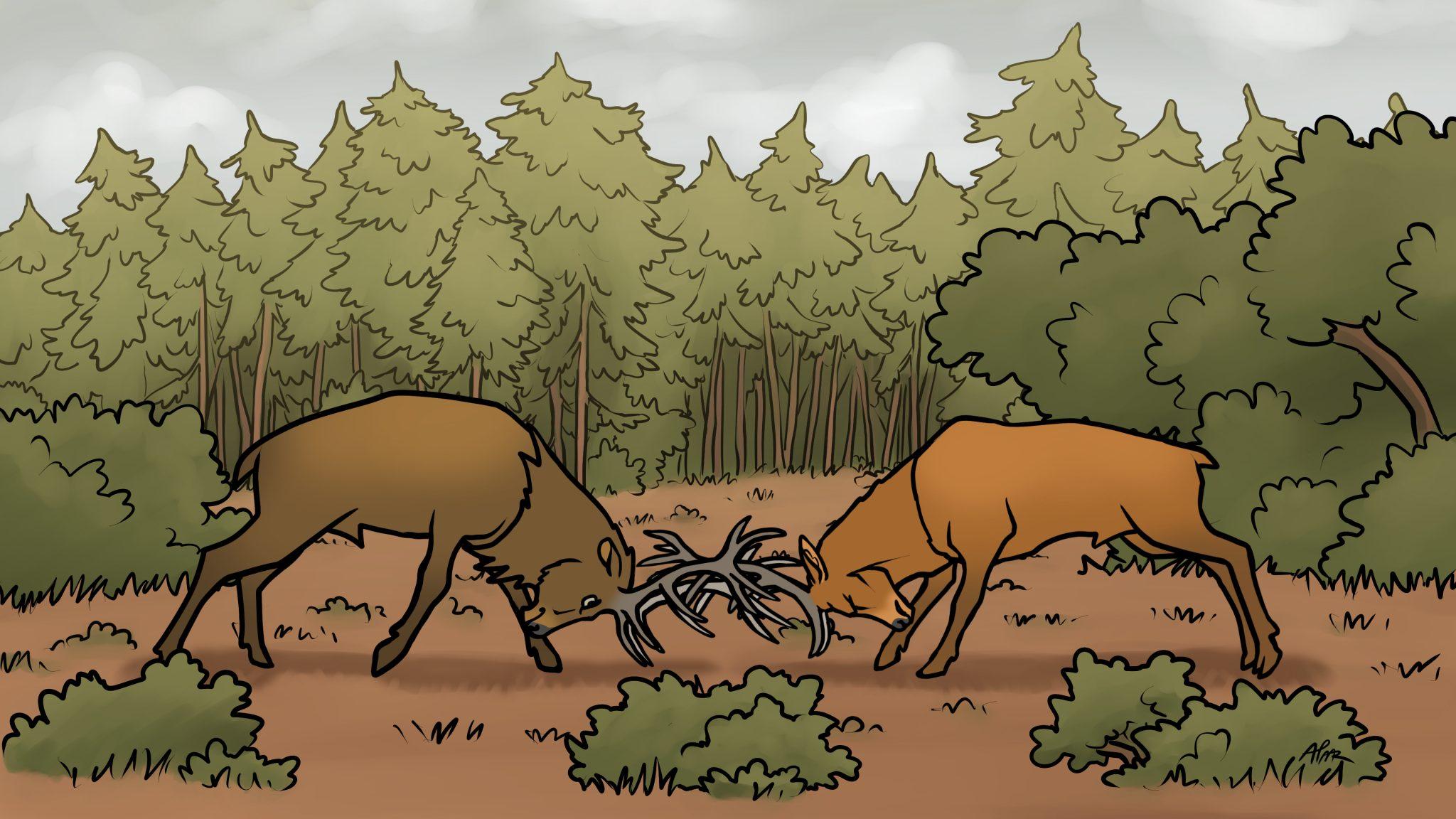 Tiergeschichten Rotwild
